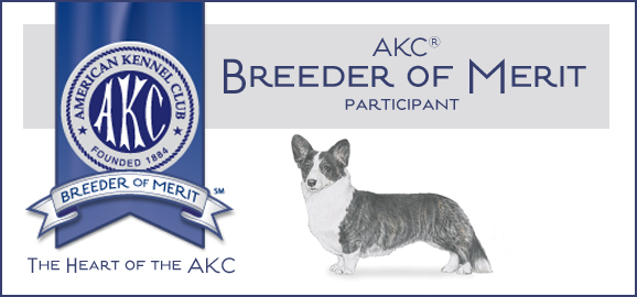 Telltail Cardigan Welsh Corgie Breeder Of Merit Award